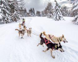Les chiens aboient, la Grande Odyssée passe…<p class='ctp-wud-title' style= 'font-family:inherit; font-size: 12px; line-height: 13px; margin: 0px; margin-top: 4px;'><span class='wudicon wudicon-tag' style='font-size: 12px;'>  </span><a href=
