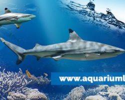 Une idée de sortie : découvrir l'aquarium de Lyon