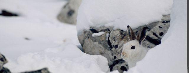 La faune sauvage a aussi le droit de prendre des vacances !