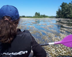 DECOUVERTE NATURE : La Loire au rythme des pagaies