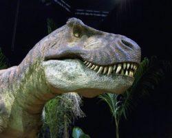 Paléontolo expo: Exposition de Dinosaures à Guilherand-Granges, du 17 au 30 octobre 2020