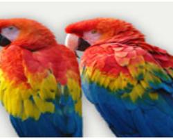 Une idée de sortie pendant les vacances de la Toussaint : Le zoo d'Upie